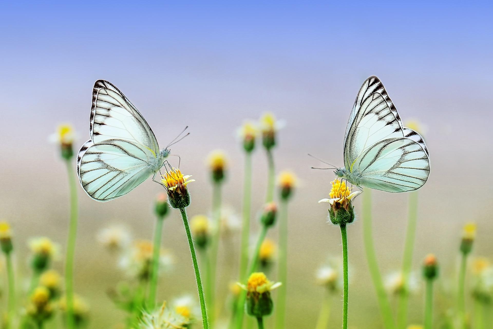 « SOS Environnement Nature », « Le permis d'environnement », « La biodiversité » et « La santé des forêts »