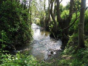 """Travaux d'entretien du """"Ruisseau des Grands Trieux"""""""