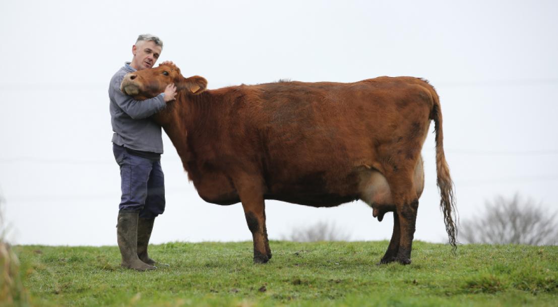 Bien-être animal – Formulaire cartographie des associations qui œuvrent pour la protection animale